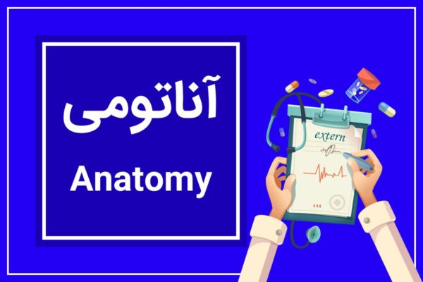 آناتومی